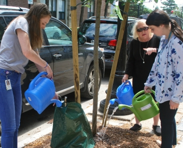 Students Holly Ann Sullivan, SLP '20 (left) and Courtney Perrigo, SLP '20 (right), water trees along 8th Street with SON Professor Dr. Patrice Nicholas.